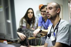 Posgrado Cardiología @ I-Vet