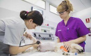 Auxiliar en laboratorio, UCI y hospitalización - Inicio del curso @ I-Vet