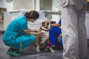 Curso Online Epilepsia Canina y Felina @ I-Vet